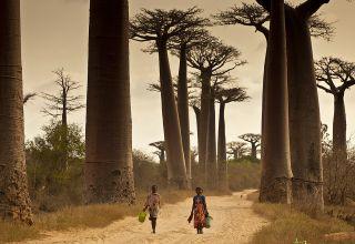 allée de baobab morondava tour opérateur agence de voyage location 4x4